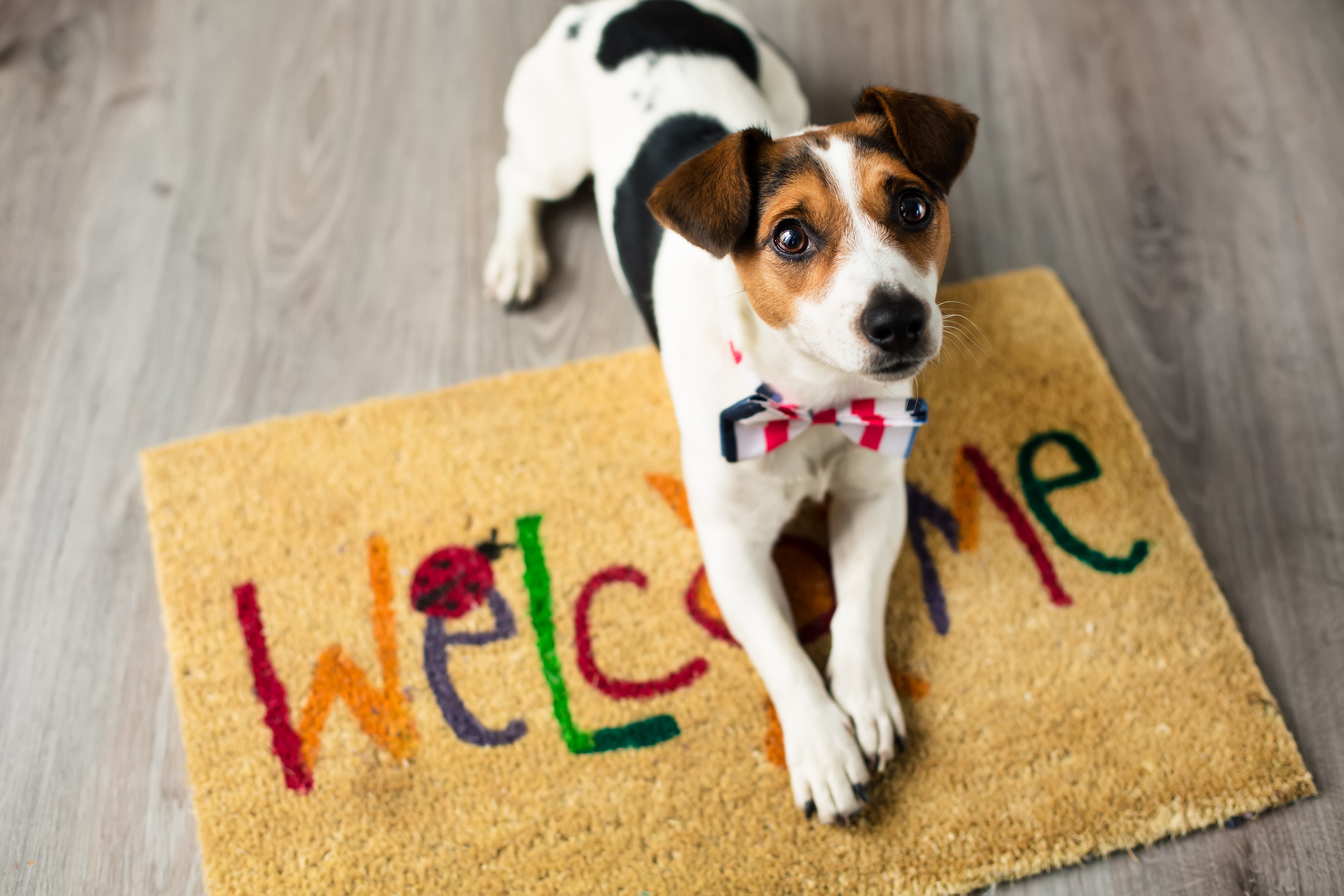 How to Find a Pet Friendly Apartment - RentTampaBay